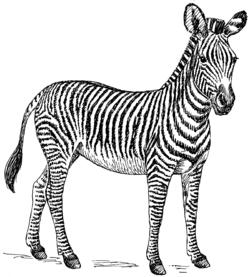 250px-Zebra_(PSF)