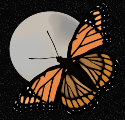 250px-Butterfly_and_moon