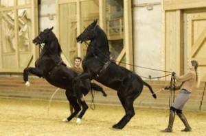 chevaux_arabes_longues_renes_201001290227