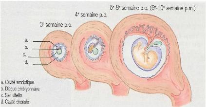 tude-du-risque-de-toxicite-lie-aux-prescriptions-medicamenteuses-chez-les-femmes-enceintes--O7