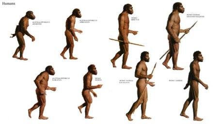 early-human-homo-sapiens-268321