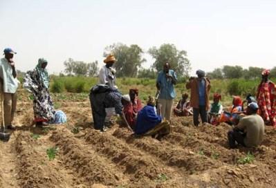 paysans-du-sud-mauritanien